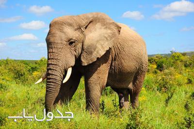 فیلش یاد هندوستان کرده