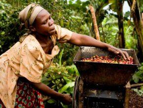 گرانترین قهوه جهان مال کدام کشور است و از چه چیز بوجود آمده است؟